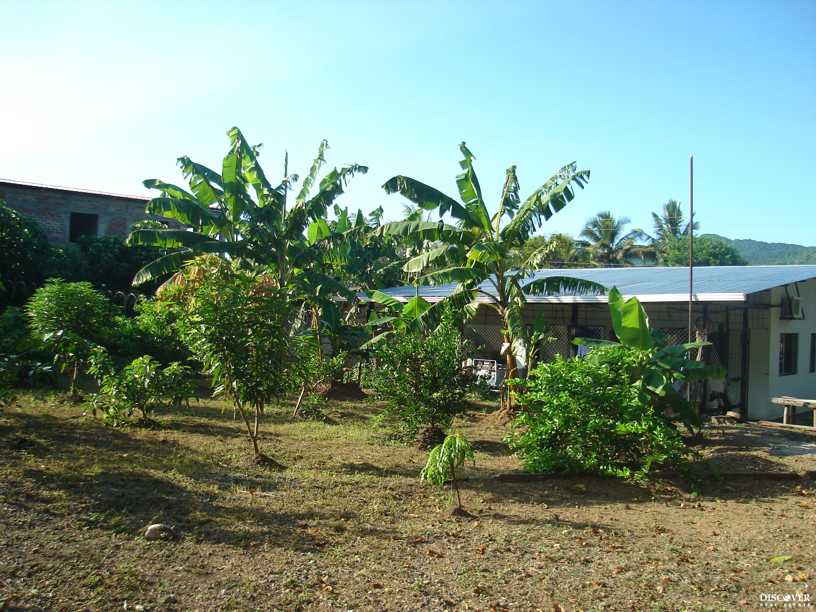 House and Land with Plenty of Fruit Trees